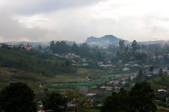 Tea Garden in Sri Lanka in a Rain Royalty Free Stock Image