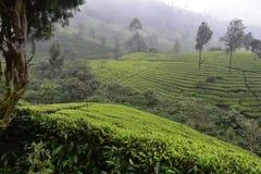 Tea gardens in India Stock Photos