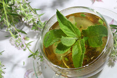 Tea from gathering of medicative herbs and mint   Royalty Free Stock Photos
