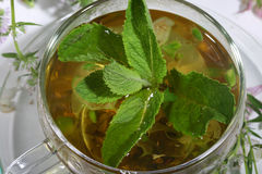Tea from gathering of medicative herbs and mint   Stock Photo