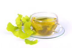 Tea ginkgo Stock Photography
