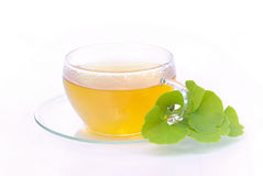 Tea ginkgo Stock Image