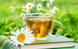 Tea. Glass cup of chamomile herbal tea with chamomile flower on books and warm plaid outdoor with nature background in garden.