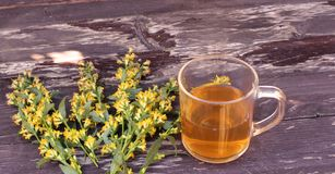 Tea in glass mug on wood background with goldenrod herb plant, Solidago virgaurea. Treats kidney and urinary tract diseases, impro. Tea in glass mug on wood royalty free stock photography