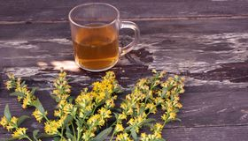 Tea in glass mug on wood background with goldenrod herb plant, Solidago virgaurea. Treats kidney and urinary tract diseases, impro. Tea in glass mug on wood royalty free stock photos