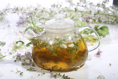 Tea from grasses and mint in a transparent teapot on a white ba Royalty Free Stock Photography