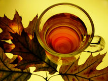 Tea and harmony. A glass with tea and autumn foliage taken from up royalty free stock images
