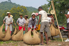 Tea harvesters, West Bengal, India Stock Photos