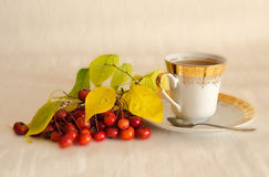 Tea with a hawthorn Royalty Free Stock Images