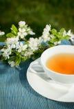 Tea of healthy herb Stock Image