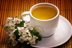 Tea herb. Cup of tea with wild dog-rose stock image