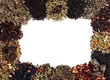 Tea herb frame Stock Image