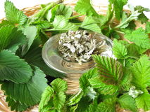 Tea herbs Royalty Free Stock Photography