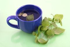Tea with herbs stock photography