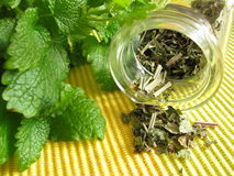 Tea herbs with balm stock photography