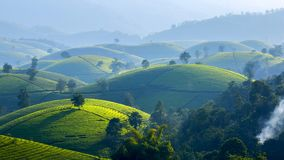 Tea hills in Long Coc highland royalty free stock photography