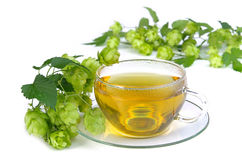Tea hop 03 Stock Photography