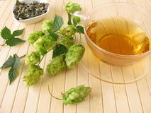 Tea with hops Royalty Free Stock Image