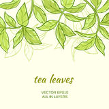 Tea. Illustration with green tea leaves on color background Stock Photos