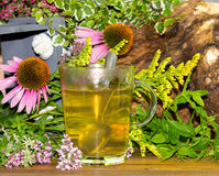 Tea or infusion of echinaces and solidago. Stock Images