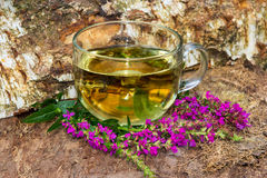 Tea or infusion of lythrum salicaria or purple loosestrife. Royalty Free Stock Photo