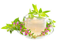 Tea or infusion of Purple lythrum Royalty Free Stock Photography