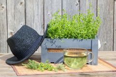 Tea or infusion of thyme. Tea or infusion of thyme fresh from the garden with a strawhead on wooden background Stock Images