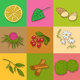 Tea ingredients. Vector set or collection. Stock Photos