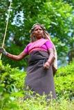 Tea lady. Lady picking young tea leaves on a tea plantation in Sri Lanka Stock Photo