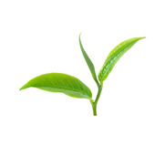Tea leaf Royalty Free Stock Photo