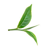 Tea leaf isolated on white background. Green tea leaf isolated on white background stock photo
