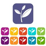 Tea leaf sprout icons set Stock Photo