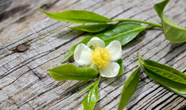 Tea leaf and tea flower Royalty Free Stock Images