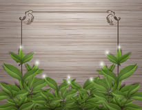 Tea Leafs on wood with frame vector design. royalty free illustration