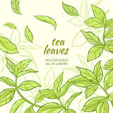 Tea leaves background. Illustration with green tea leaves  on color background Stock Photos