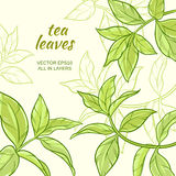 Tea leaves background. Illustration with green tea leaves on color background Stock Images
