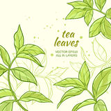 Tea leaves background. Illustration with green tea leaves on color background Royalty Free Stock Image