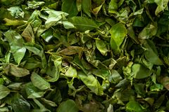 Tea leaves are dried in a tea factory background stock images