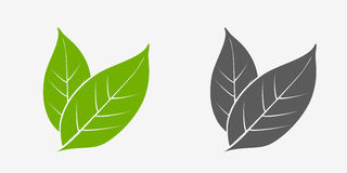 Tea leaves icon set. Green and gray. Stock Photography