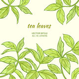 Tea leaves. Illustration with green tea leaves on color background Stock Image