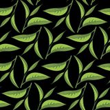 Tea leaves pattern with black backdrop Stock Images