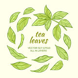 Tea leaves set. Illustration with green tea leaves on color background Stock Photo