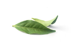 Tea leaves Royalty Free Stock Photo