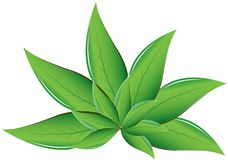 Tea leaves Vector illustration Royalty Free Stock Photo