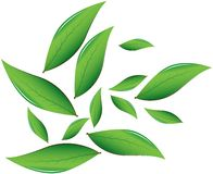 Tea leaves Vector illustration Stock Photos