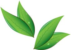 Tea leaves Vector illustration Royalty Free Stock Photos