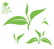 Tea.  leaves on white background Stock Image