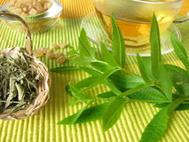 Tea with lemon verbena Stock Images