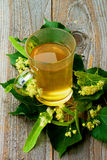 Tea of Linden-Tree Flowers Stock Image