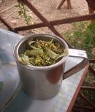Tea of linden-tree's flowers Royalty Free Stock Photo